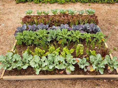 Winter Vegetable Garden California What To Plant This Fall Diy Network Made Remade