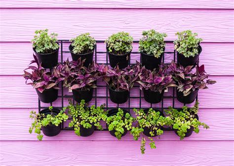 Vertical Garden Pot Grow Up How To Design Vertical Gardens For Tiny Spaces