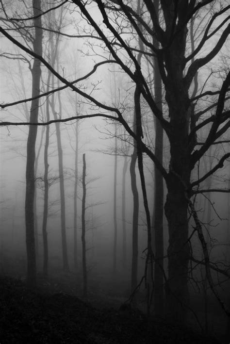 zen and the of murder a black forest investigation i the black forest investigations book 1 books 25 best ideas about haunted forest on foggy