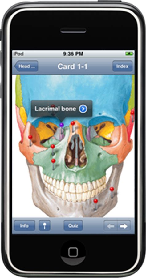 Netters Anatomy Flash Cards Iphone Free