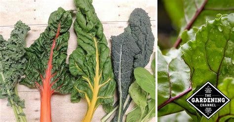 list  green leafy vegetables gardening channel