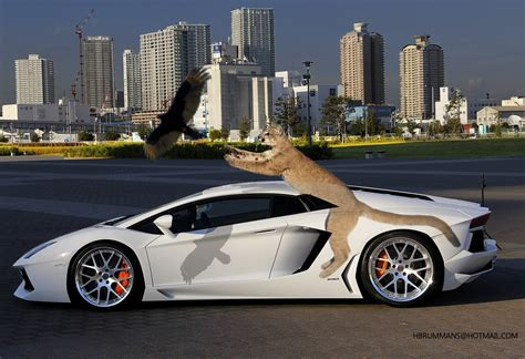 How Fast Is A Lamborghini Aventador Lamborghini Aventador Not Fast Enough By