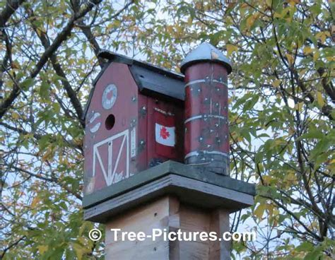 Bird Houses, Creative Birdhouse Designs