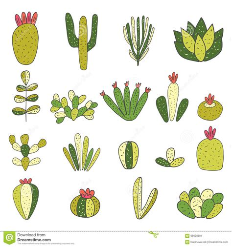 cactus doodle doodle cactus succulent collection stock