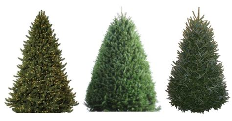 best 28 walmart fresh cut christmas tree prices