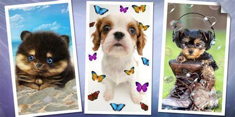 Untuk Anak Anjing Gratis Anak Anjing Manis Dan Anjing Gratis Anak