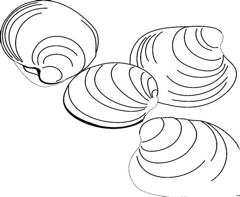 Muschel Vorlagen by Vier Muscheln Ausmalbild Malvorlage Tiere