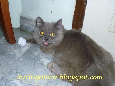 Mainan Kucing Bola Pyramid kucing utara bola mainan kucing