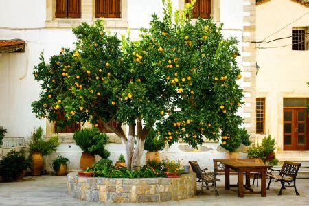 Patio Orange Tree by Orange Tree Patio Jigsaw Puzzle