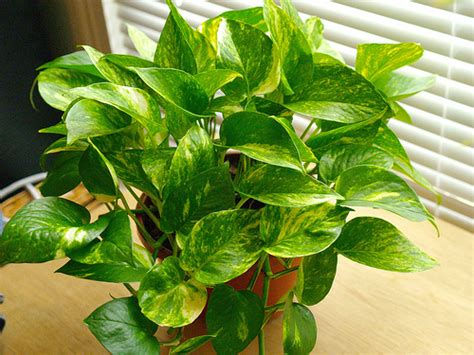 good houseplants houseplants what are some low maintenance plant choices