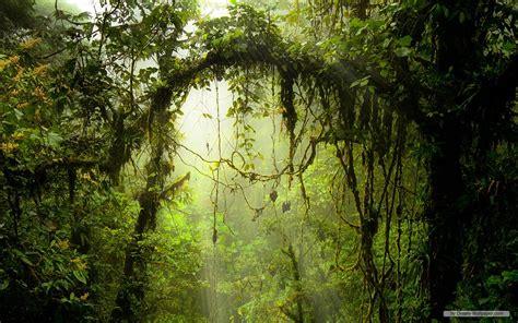 7 Beautiful Tree Themes by Free Wallpaper Free Nature Wallpaper Windows 7 Themes