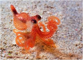animals cute animal underwater octopus beach ocean crab