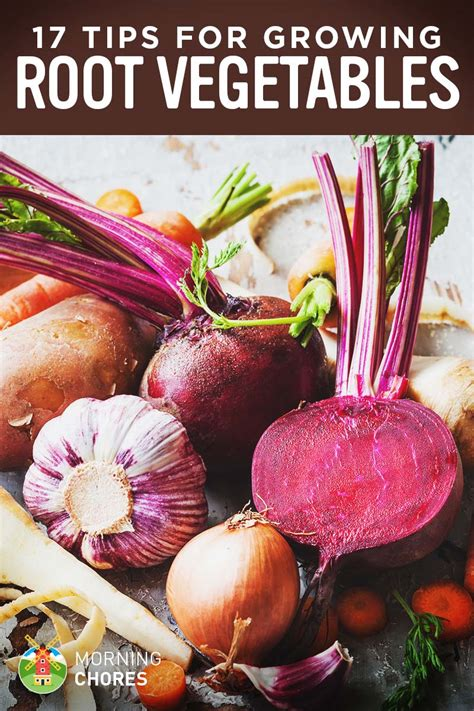 Chicken Root Vegetables - 17 tips for growing harvesting and storing root vegetables successfully