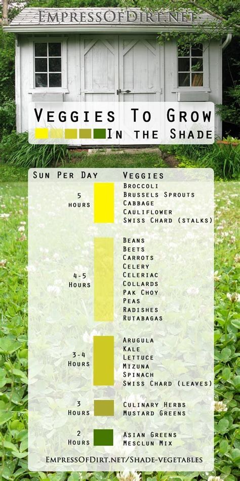 23 Diagrams That Make Gardening So Much Easier Just Look How Much Sun Does A Vegetable Garden Need