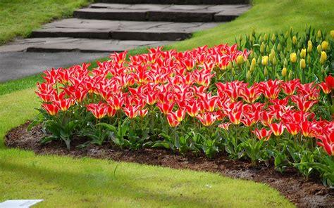 fiori di appartamento fiori e piante cura piante appartamento come creare un