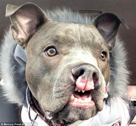 cleft lip puppy meet the who rescues the undateables of the canine world and helps