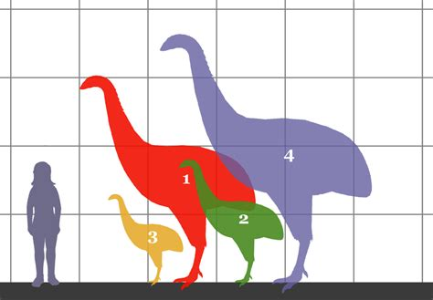 3 5 m to feet consider the moa extinct flightless birds of new zealand