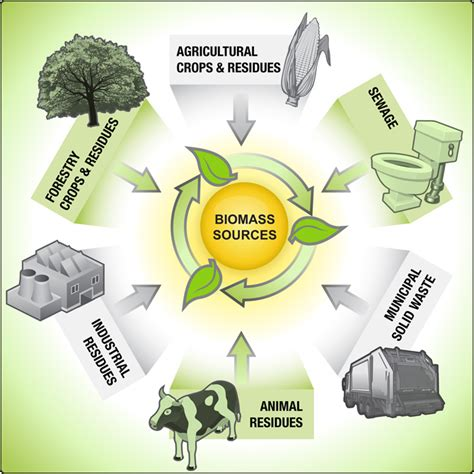 biography sources definition all you need to know about biomass