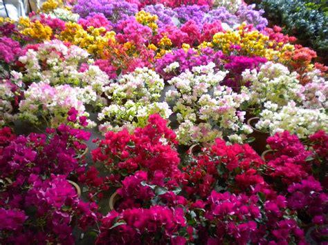 imagenes todo flores inaugurar 225 n el octavo mercado de las flores a fin de mes