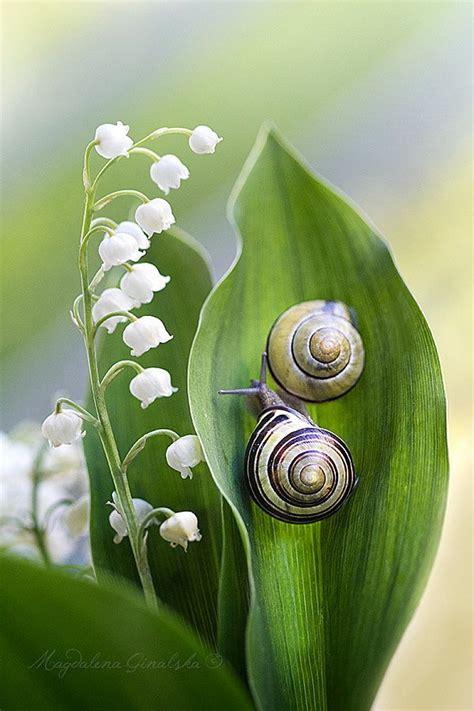 Creature Comforts Snail by Si Quieres Saber Algo Ve A Otro Lugar Si Quieres Saber