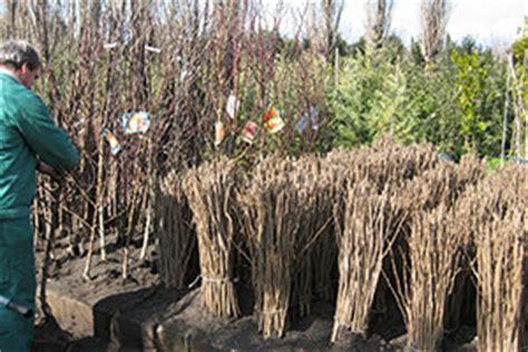 piante da frutto in vaso prezzi piante frutto vivai michelinivivai michelini