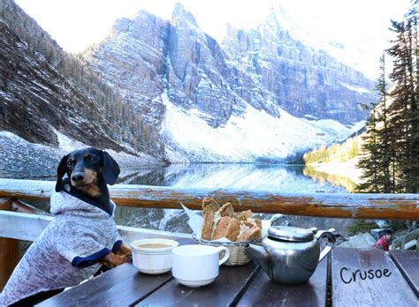 the lake house dog my much needed vacation to banff national park crusoe the celebrity dachshund
