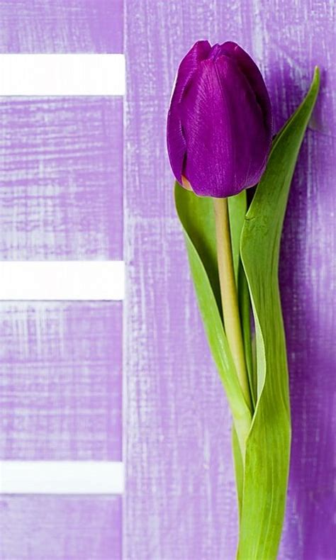 wallpaper whatsapp purple 20 best images about whatsapp wallpapers on pinterest