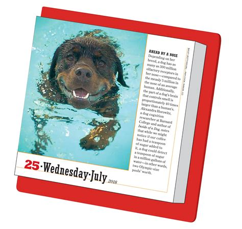 365 dogs page a day calendar 0761193952 amazon com 365 dogs page a day calendar 2018 9780761193951 workman publishing books