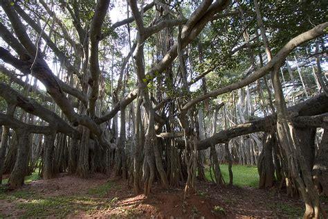 banyan tree bank day trips from bangalore 5 wander in sholay land
