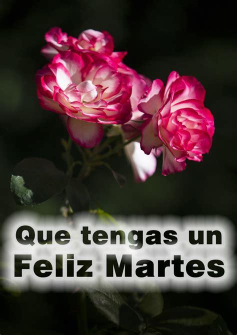 imagenes de rosas feliz martes frases con im 193 genes feliz martes
