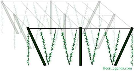 Wood Trellis Plans by Hops Planting Location And Trellis Design Where Legends