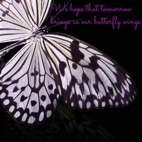 quotes  butterfly wings quotesgram