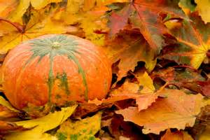 autumn pumpkin autumn posters picture