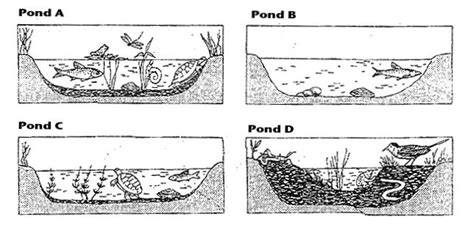 From Pond To Forest Worksheet Answers examining stages in ecological succession