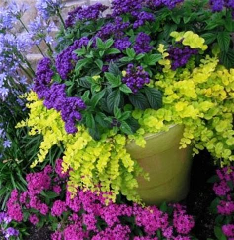Plant Combination Ideas For Container Gardens Fibermania Container Garden