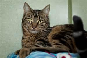 Girl cat names for tabby