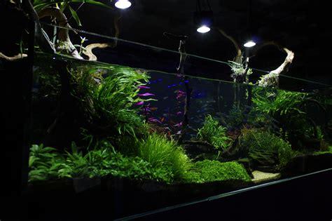 aquarium design centre aquatic design centre ltd aquarium design specialists