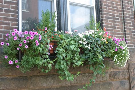 window flower box julie s journeys philadelphia window flower boxes