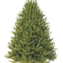 hudson valley christmas trees artificial in america closed home decor 840 broadway newburgh ny phone number yelp