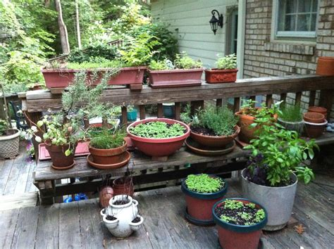 garden kitchen vegetable fruit and herb gardening a gardener s delight