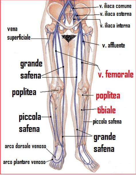 linfonodi interno coscia bushcraft e medicina i disturbi ritorno venoso