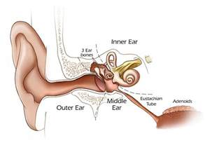 perforated ear drum problem ent clinic sydney