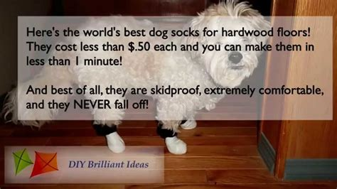 dogs and hardwood floors best socks for hardwood floors gurus floor