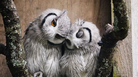 Owl Lovers | white wolf 15 adorable photos of owls caught in a warm