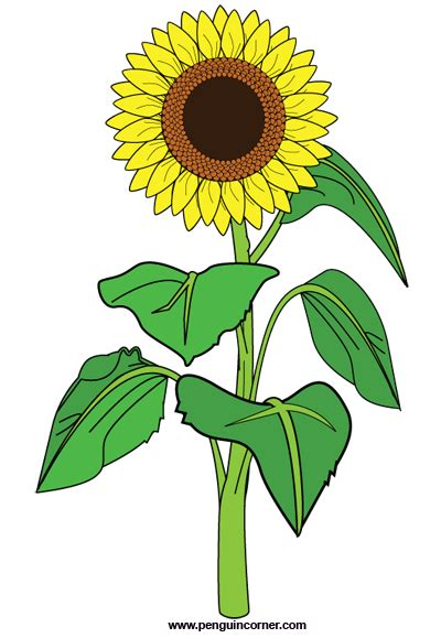 Sunflower Outline Png by Best Beautiful Sunflower Clipart 4018 Clipartion
