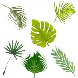 palm tree leaf template palm tree leaves collection vector free