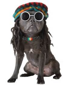 Rasta mon dog costume costume craze