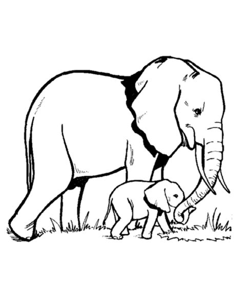 cute wild animals coloring pages wild animal coloring page elephant family coloring page