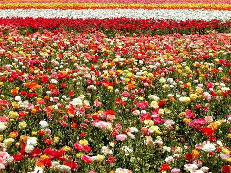 imagenes de jardines llenos de rosas todo informacion paisajes llenos de plantas hermosas