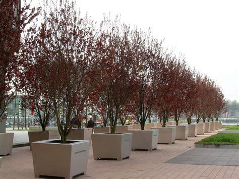 Bomen In Pot Op Terras by Bomen In Bakken Een Praktische Oplossing Voor Groen In De